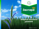 Презентация - Bayer CropScience